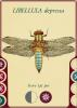 anisoptera_2